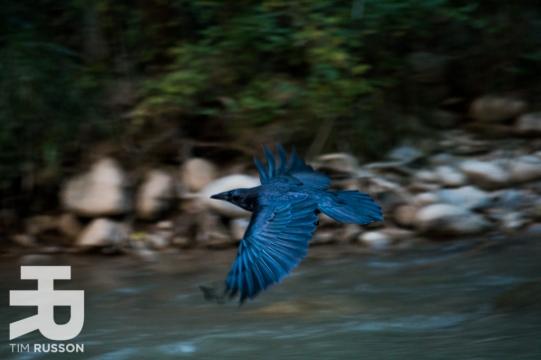 Tim-Russon-Zion-River-Walk-2.jpg